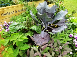 Container grown vegetables and herbs; care home garden