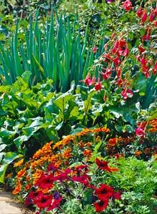 Growing your own vegetables for Ornamental vegetable garden design