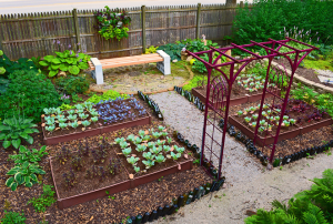 vegetable garden with seperate beds