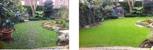 Medium sized garden with lawn. Before and after installation of artificial grass.